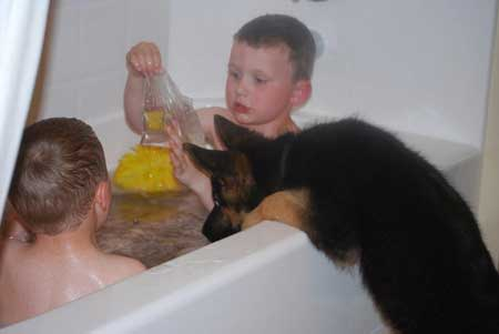 Dogs With Children Kids And German Shepherd Dogs German